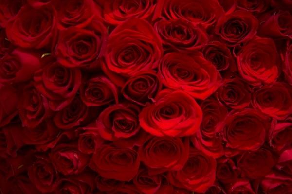 赤は癒しの色