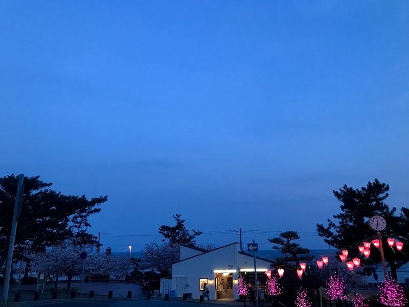 敦盛桜2019